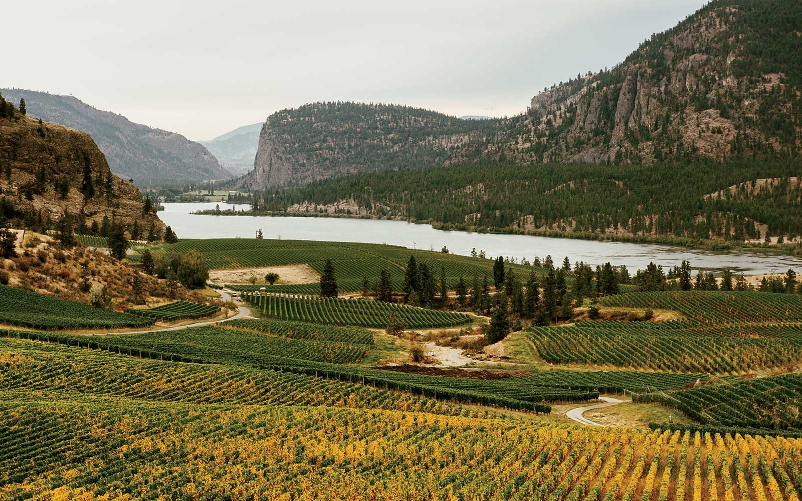 Blue Mountain Vineyard, in Okanagan Valley, British Columbia, Canada