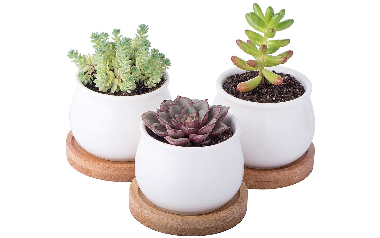 succulents and planters