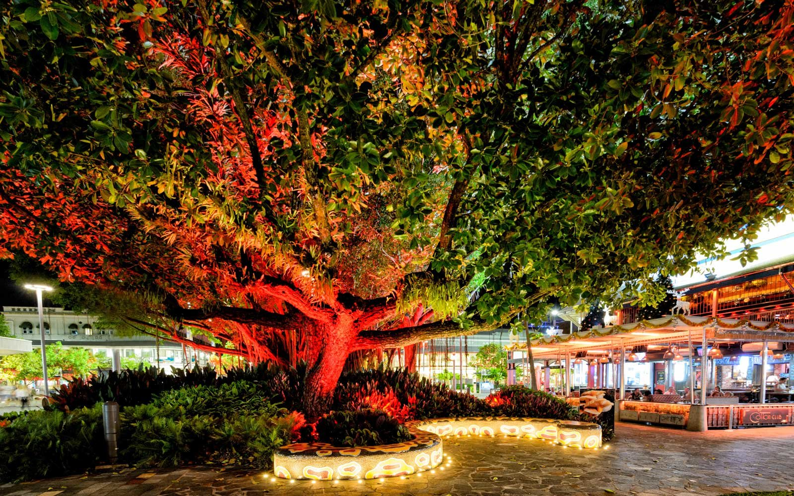 Fig Christmas tree in Cairns, Australia