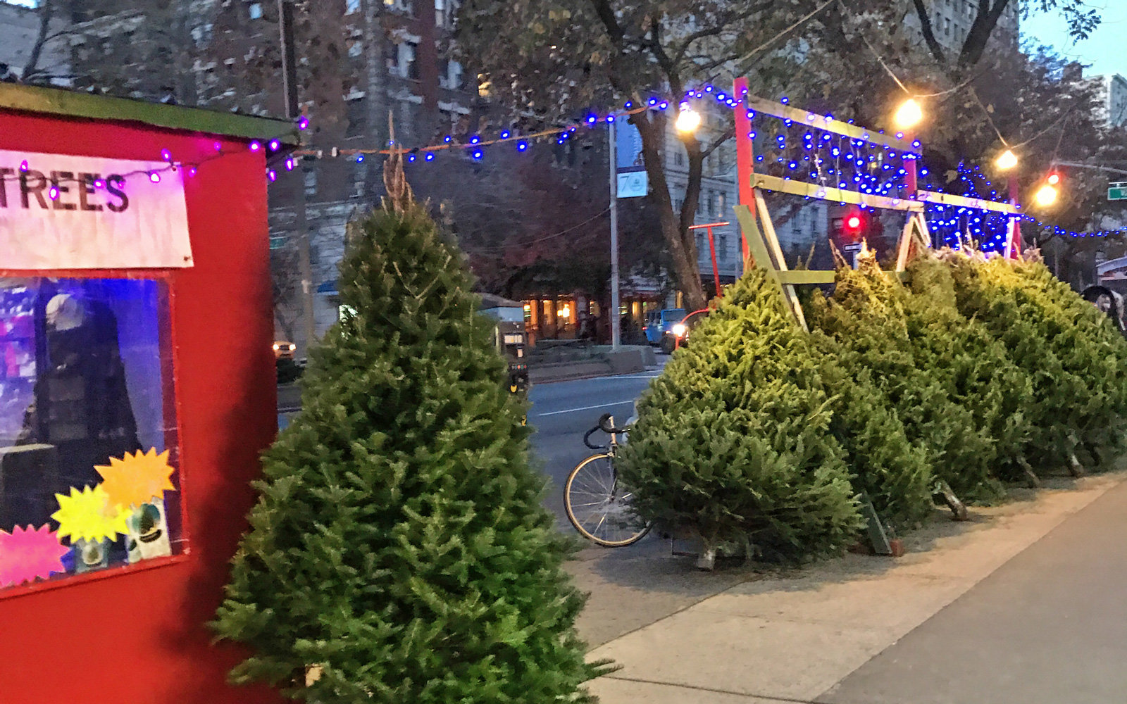 Christmas trees for sale in New York City