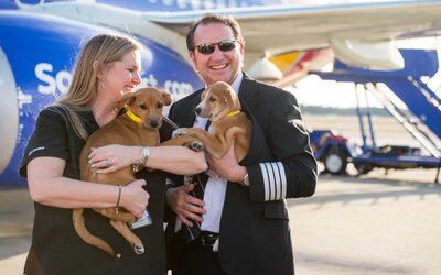 This Southwest Airlines Pilot Rescued 62 Stray Dogs and Cats