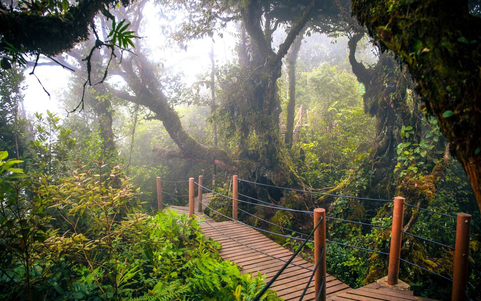 The Mossy Forest, Cameron Highland, Malaysia
