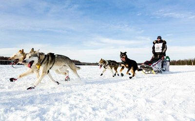 How to See the Iditarod in Alaska | Travel + Leisure