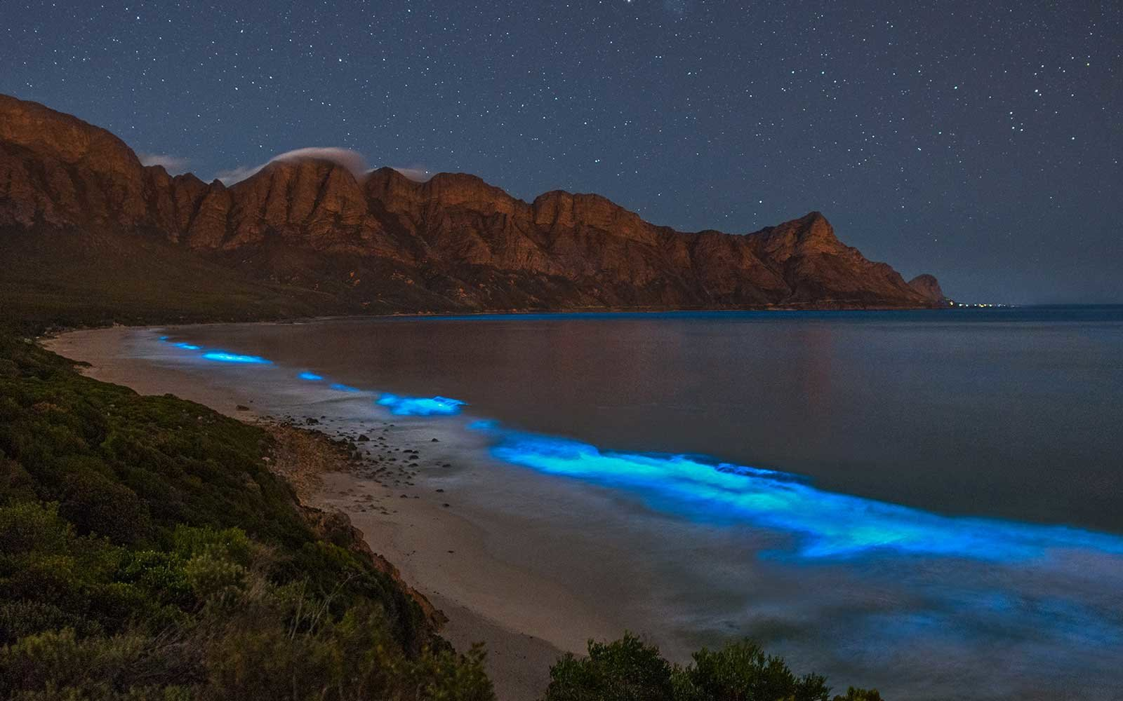 Bioluminescent Cape Town Spring 2018