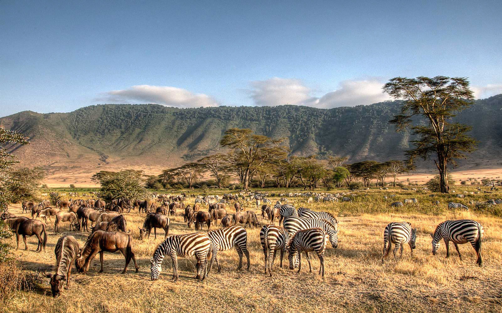 Animals grazing in the basin of the Ngorongora Crater in Tanzania