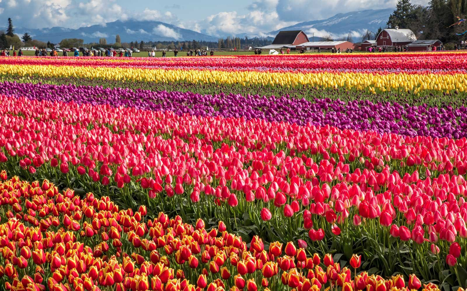 8 best spring and summer flower festivals in the u.s. | travel + leisure