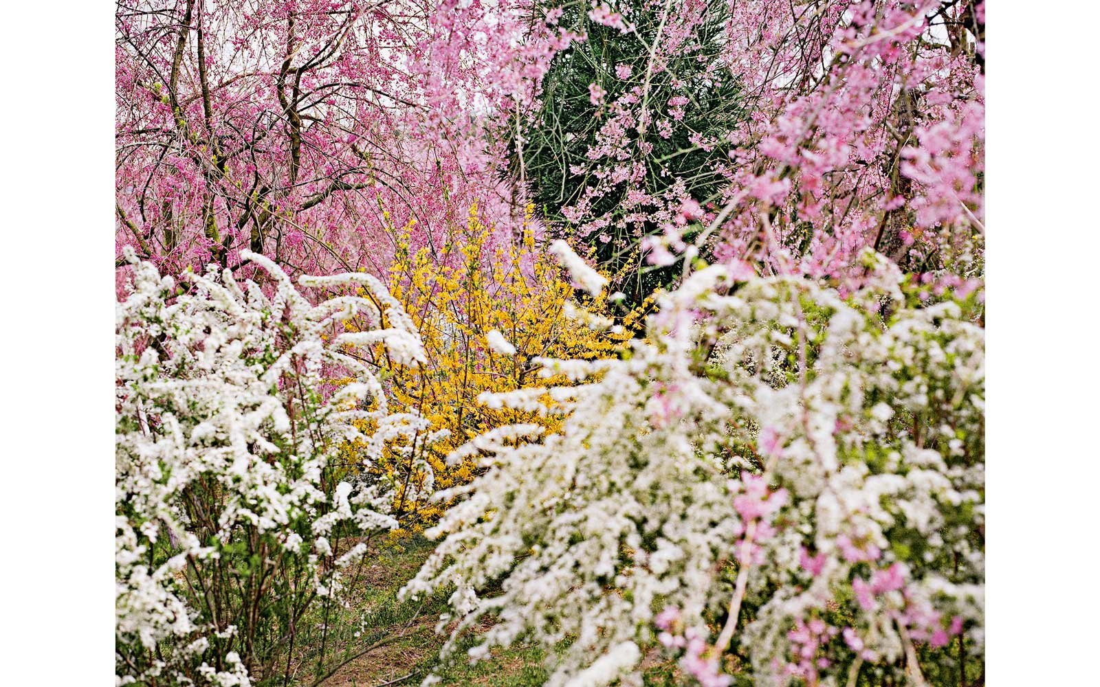 Jacqueline Hassink, Haradani-en 1, Northwest Kyoto, 2010; from the series View, Kyoto