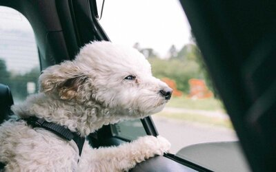 How to Keep Your Dog From Getting Car Sick — and What to Do