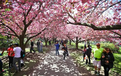 You Can Get Into Some Of The Best Public Gardens In The U S For