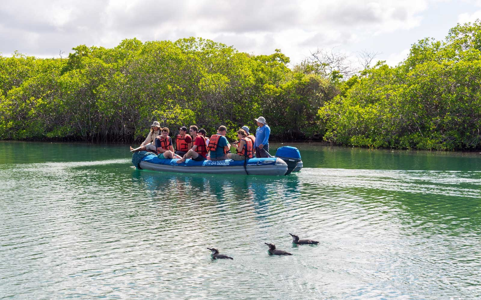 Penguins swimming next to a boat of tourists in the Galapagos Islands in Ecuador