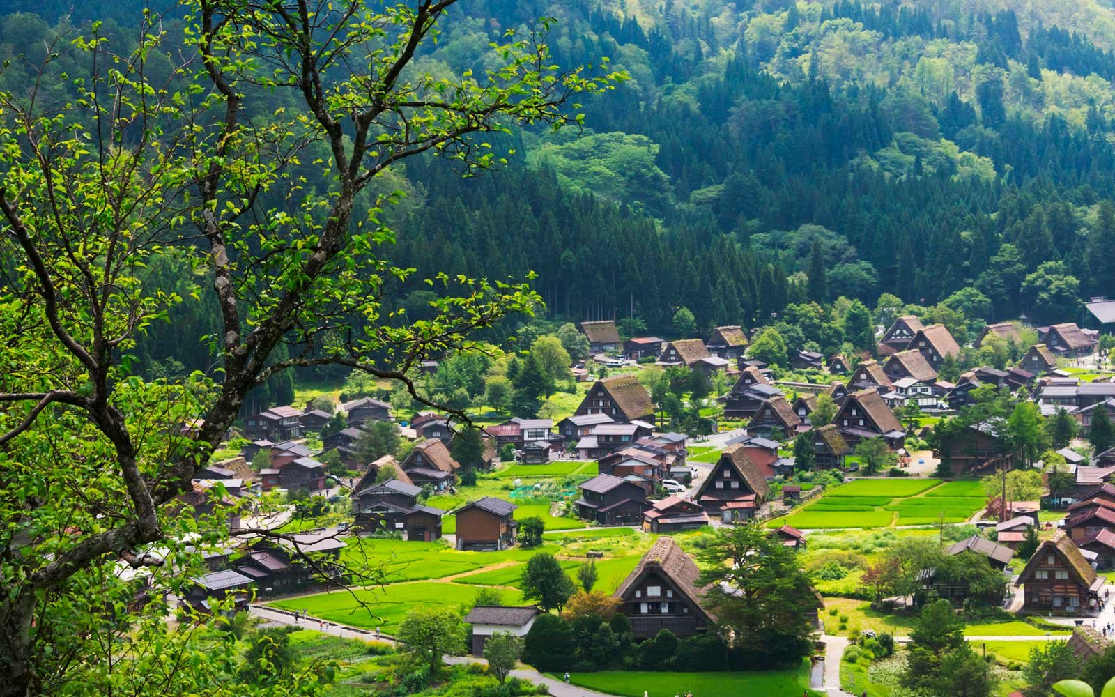 Japan Is Giving Away 8 Million Abandoned Houses — Here's How to Get One (Video)