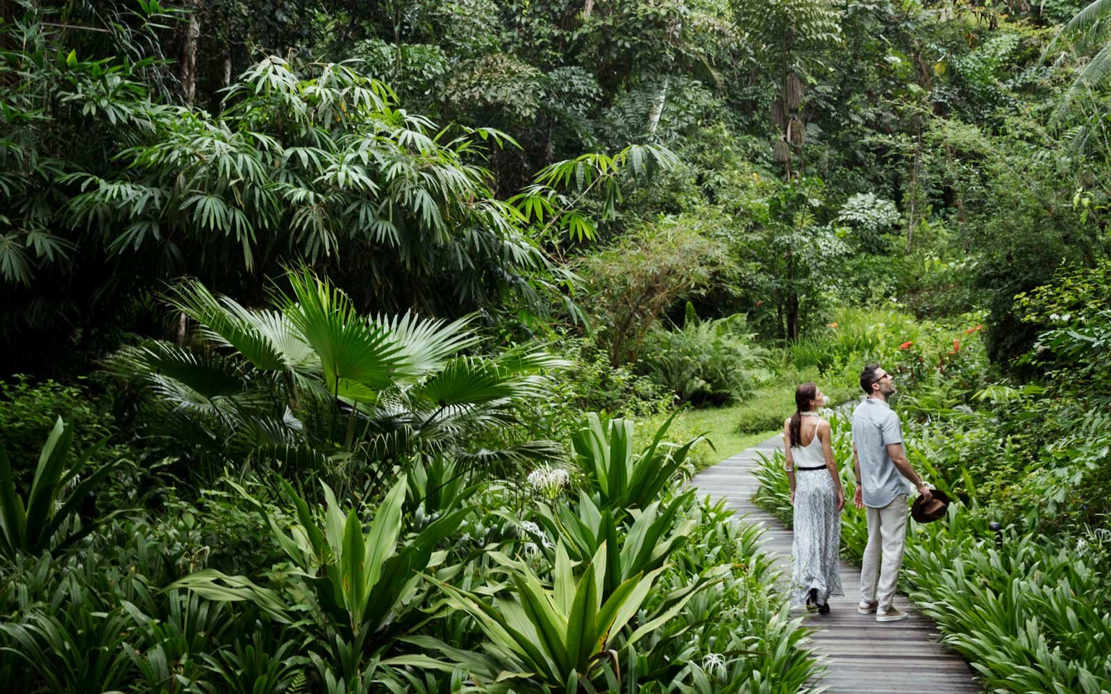 Butterfly walk at the Datai Langkawi hotel