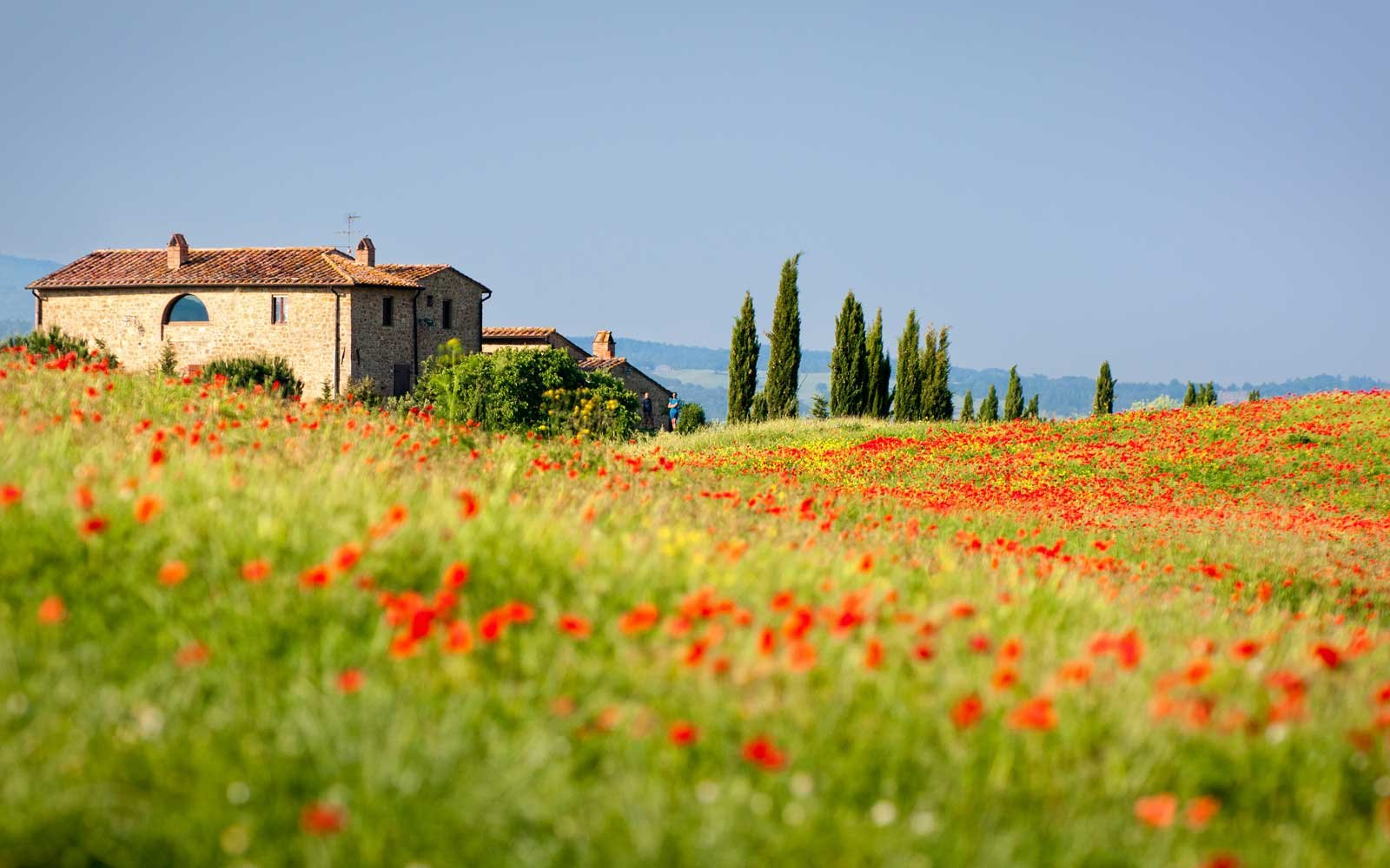 Spring poppies in Tuscany, Italy
