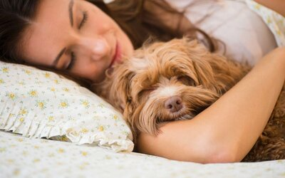 885f297a7bb Study Says Women Sleep Better With Their Dogs Than With Their ...