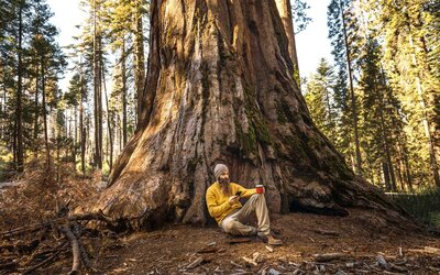 Sequoia National Park Will Soon Have Cell Service Travel