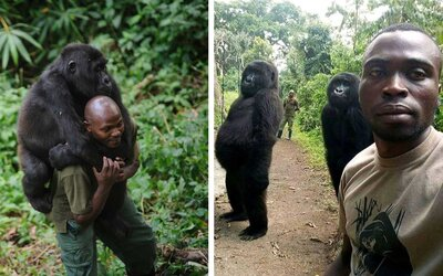These Mountain Gorillas Are Better at Posing for Selfies