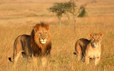 b016312e These 'Lion King' Safaris in Kenya and Tanzania Will Show You the ...