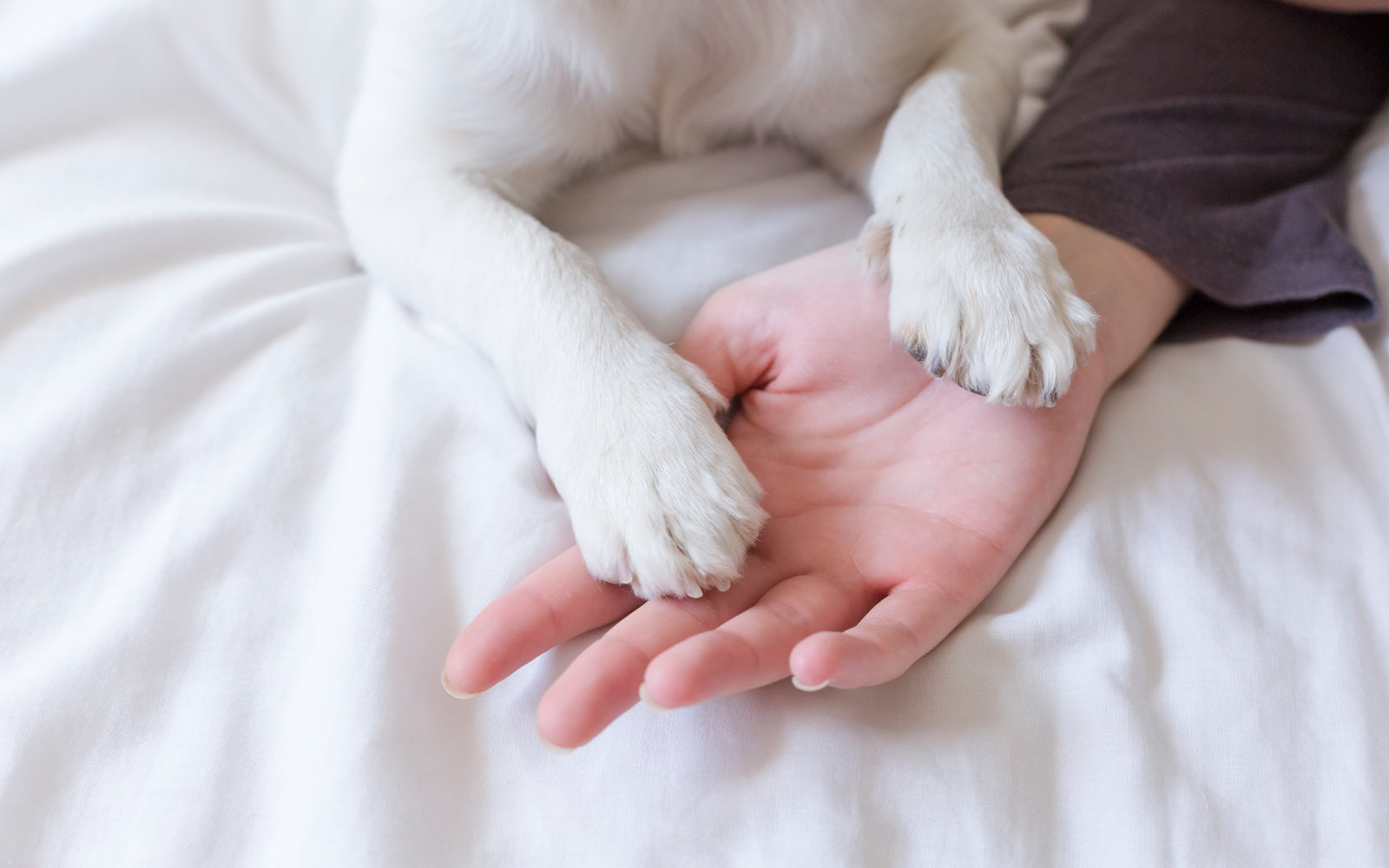 Pet dog's paw
