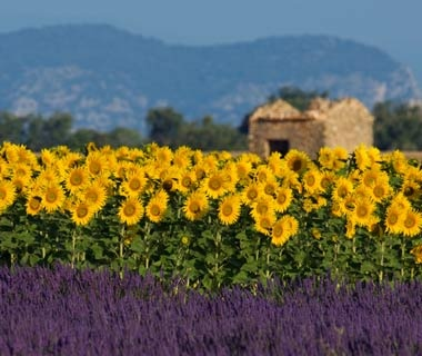 Cultural Odyssey: Provence
