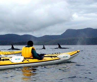 Sea Kayaking Amid Killer Whales in British Columbia