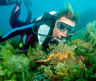 Snorkel with Sea Dragons: Australia