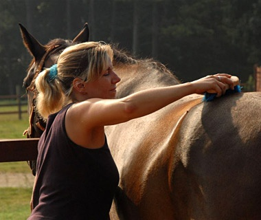 woman grooming a horse in Southern Cross Ranch, Madison, GA