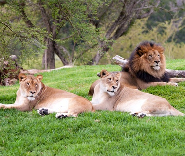 201207-w-most-visited-zoos-san-diego-safari-park