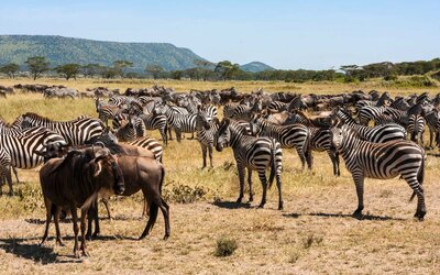 Unconventional African Safari Trips | Travel + Leisure