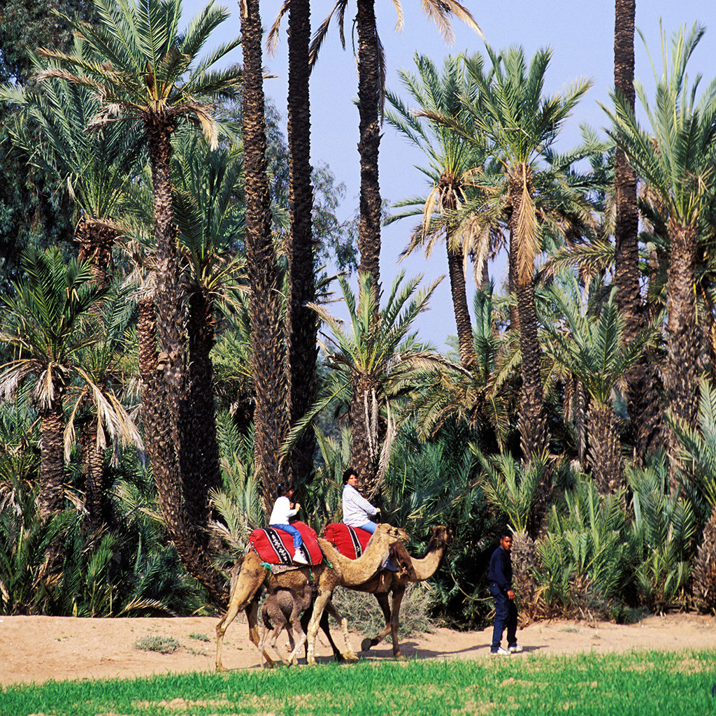 5 Best Things for Kids to Do in Marrakesh
