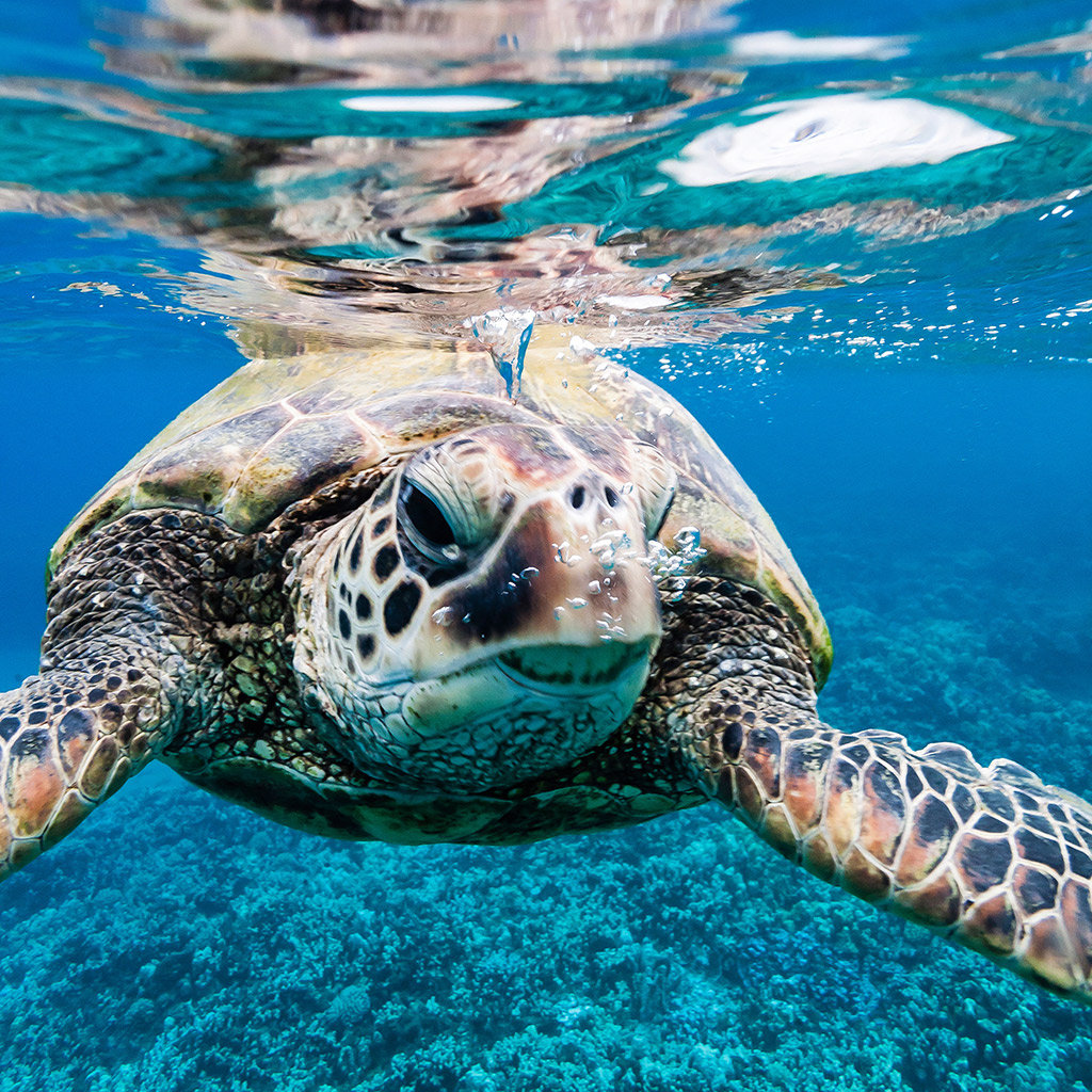 Best Places to See Animals in Maui