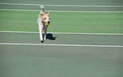 Topnotch Resort Offers Dog-Friendly Tennis Package | Travel + Leisure