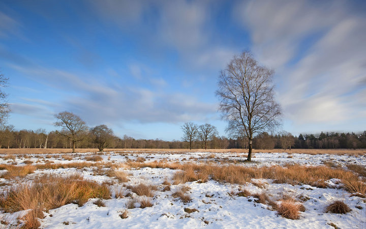 Sunny winter day in National Park de Hoge Veluwe