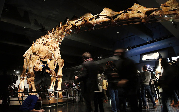 "NEW YORK, NY - JANUARY 14: A replica of one of the largest dinosaurs ever discovered is unveiled at the American Museum of Natural History on January 14, 2016 in New York City. The replica of the ""Titanosaur"" weighs about 70 tons, is 17 feet tall and st"