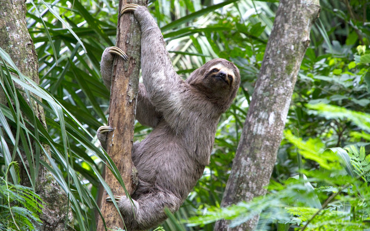 Sloth Break In