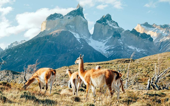 How to Travel to Patagonia