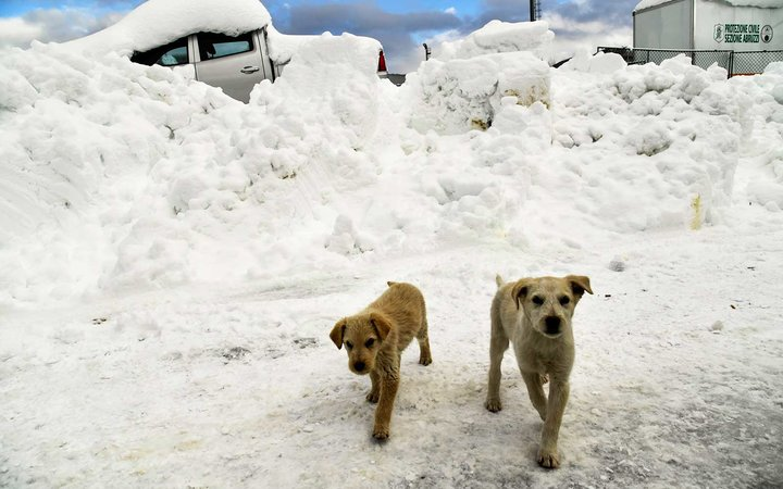 3 Puppies Found Alive 5 Days After an Avalanche in Italy