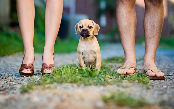Three companies that give staff paid time off when they get a puppy