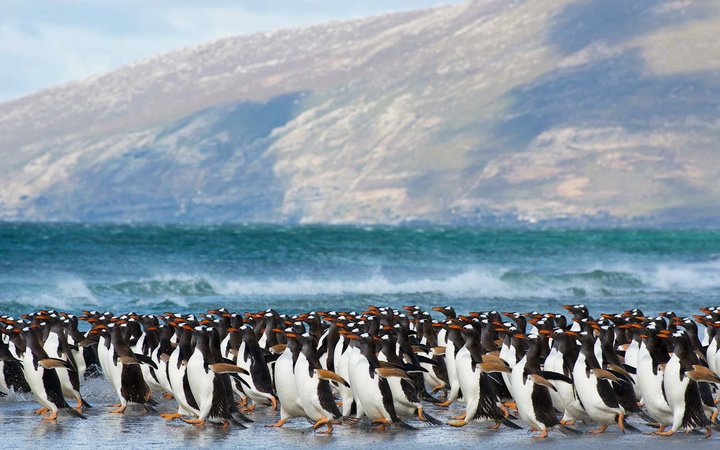 A Guide to Vacationing on the Falkland Islands