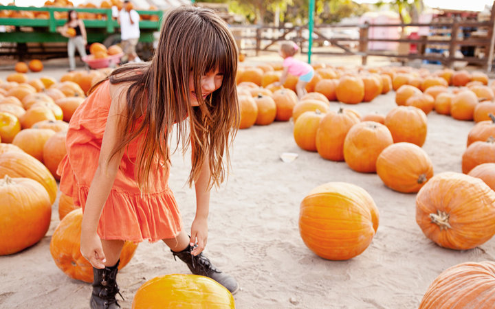Girl choosing pumpkin in farmyard