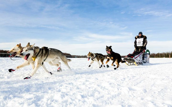 Musher Allen Moore competing in the 41st Iditarod Trail Sled Dog Race on Long Lake, Alaska.