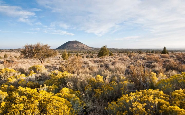 Rabbit Brush Near Schonchin Butte