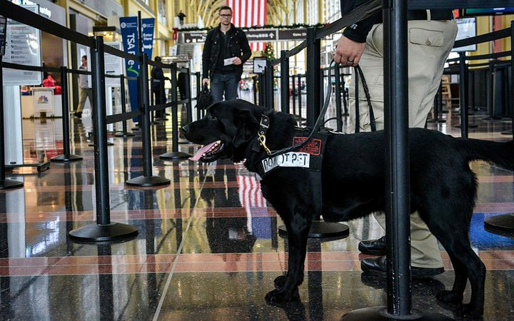 Transportation Security Administration (TSA) and Bomb-Sniffing Dogs at Airports