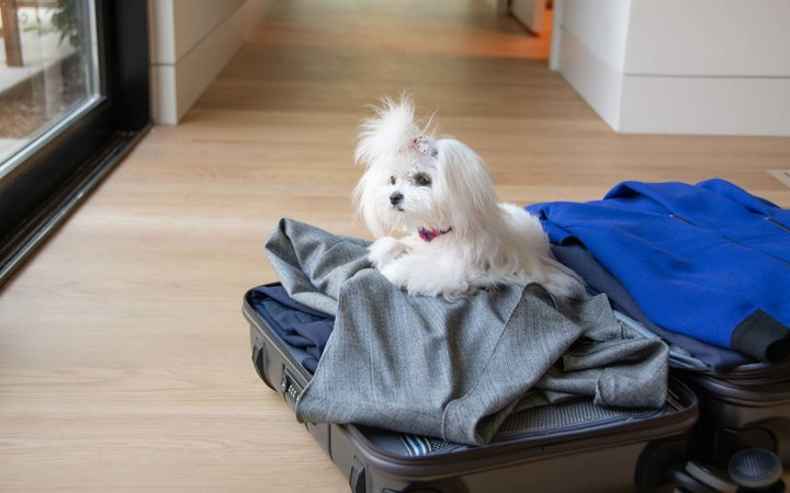 Maltese Puppy laying open suitcase