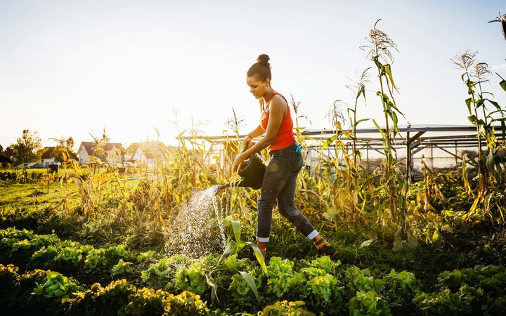 Young Urban Farmer Watering Crops By Hand