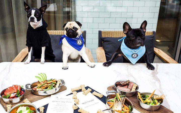 N.Y.C. Restaurant Debuts Dog Menu that Features a $42 Steak for Canines