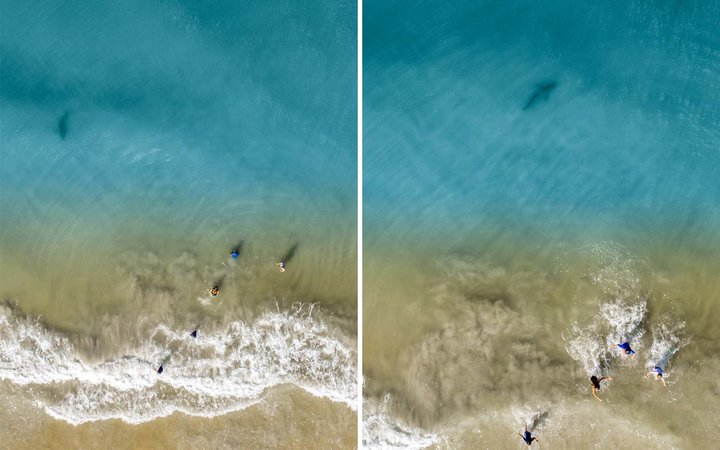 Shark Lurks Near Children Swimming at Florida Beach in Chilling Drone Images Captured by Their Dad