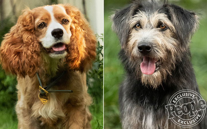 First Look: See the Canine Cast Starring in the Live-Action Lady and the Tramp Remake
