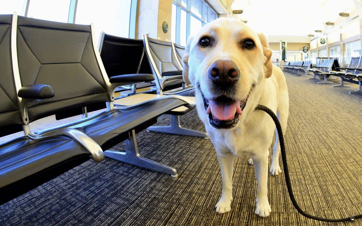 Dog at airport