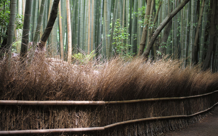 Frank Roop's photo of a bamboo forest