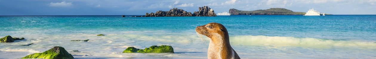 Sea Lion on Espanola Island in the Galapagos